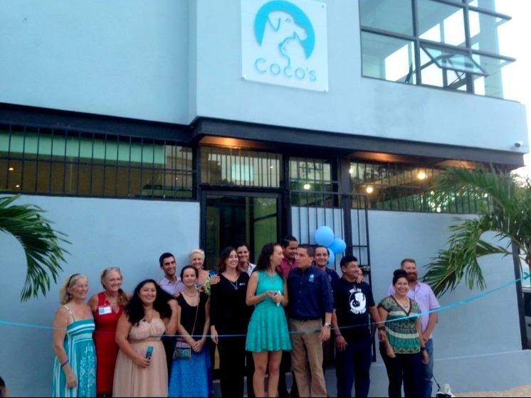 cocos3