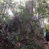 Khao Lak Hike