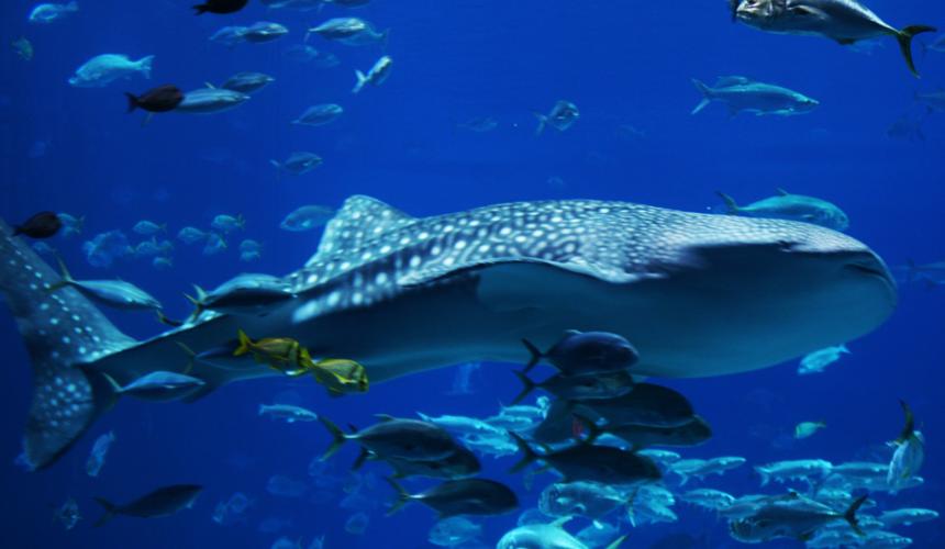 9 Stunning Photographs to Celebrate Shark Awareness Day