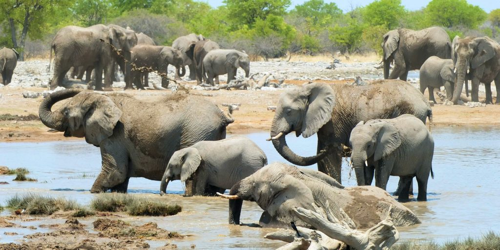 Elephants digging in the watering hole