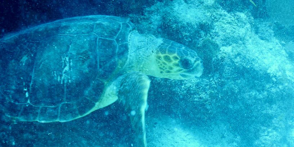 volunteer in marine conservation with GVI