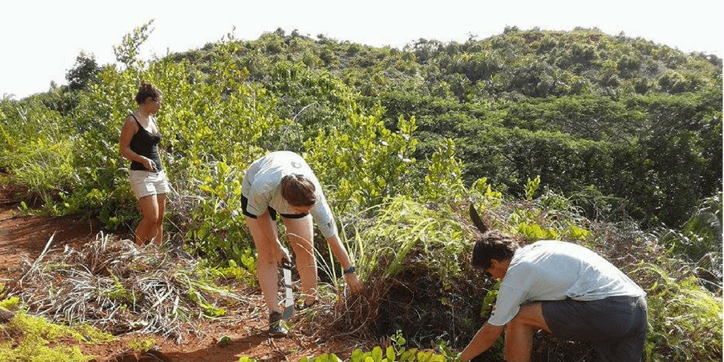conservation volunteer work for high school students in seychelles