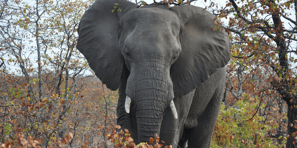 Elephant Impact Study In South Africa