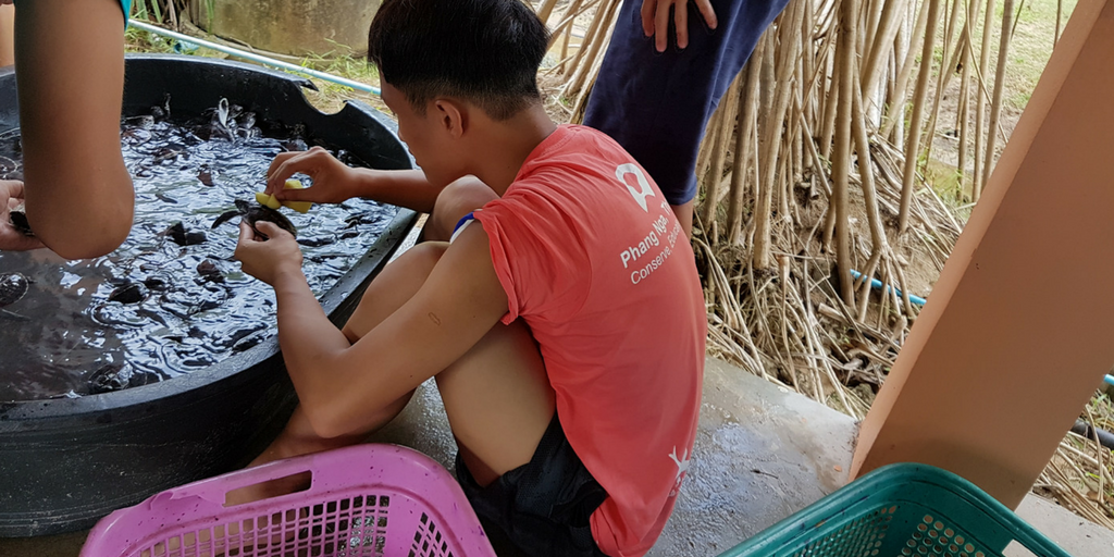 Work To Preserve Thailand's Coastline