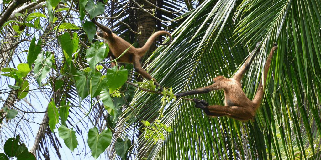 Rainforest Exploration And Biodiversity Summer Research Program In Costa Rica