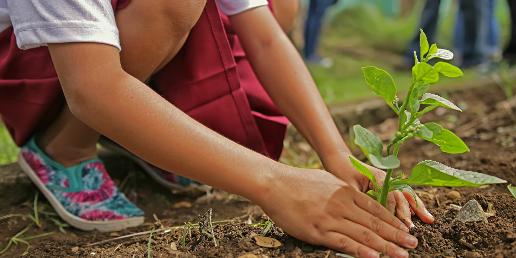 A person planting a tree in the soil.