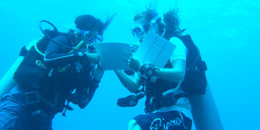 volunteer mexico diving