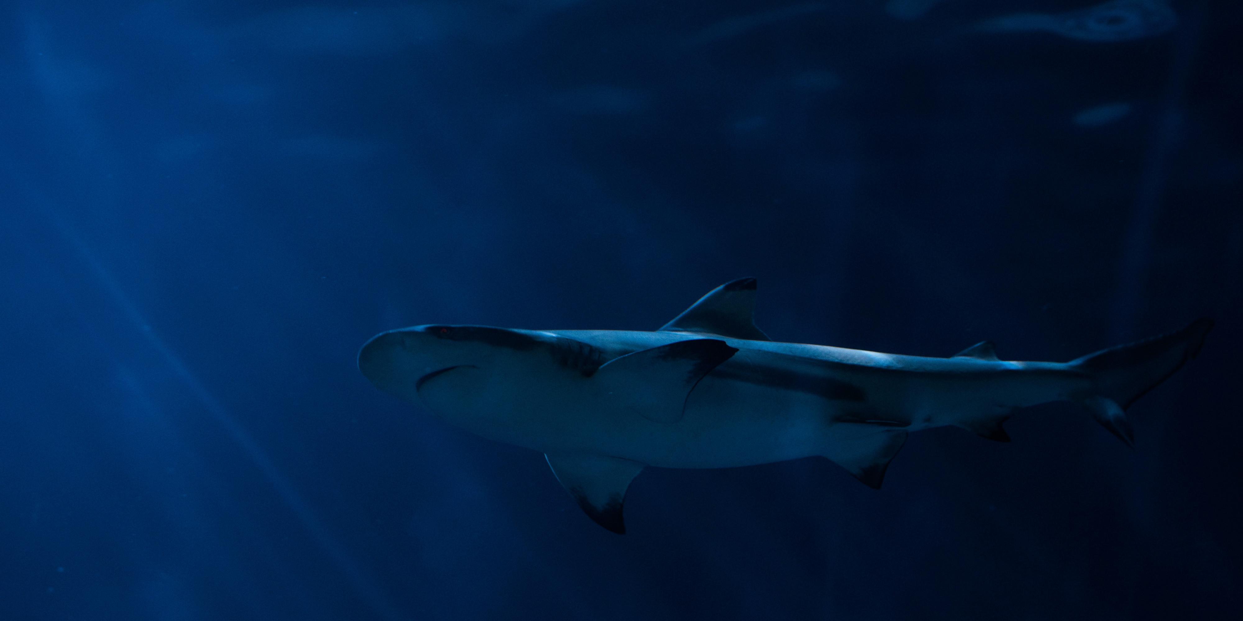 fear of sharks