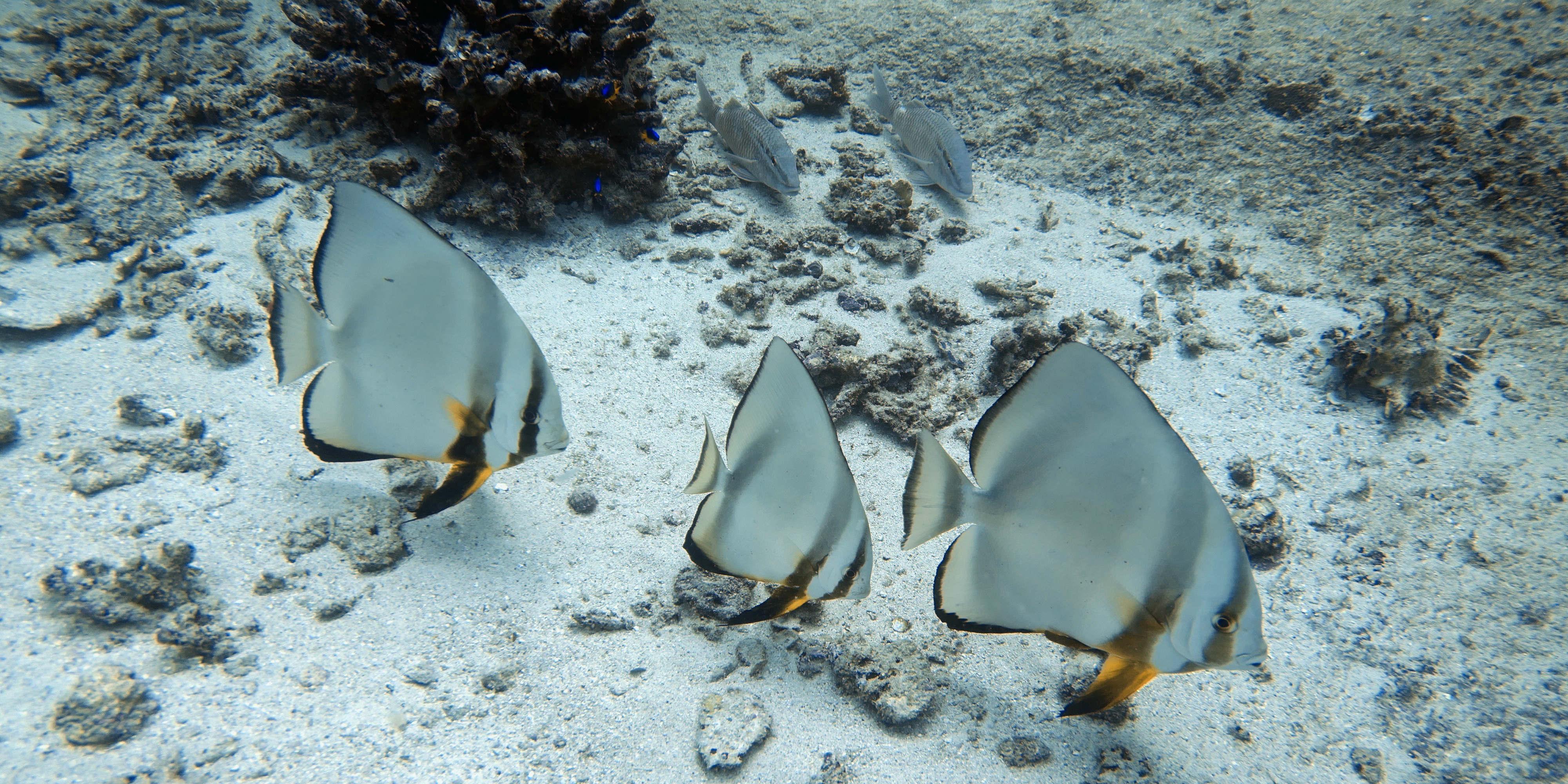 coral bleaching statistics