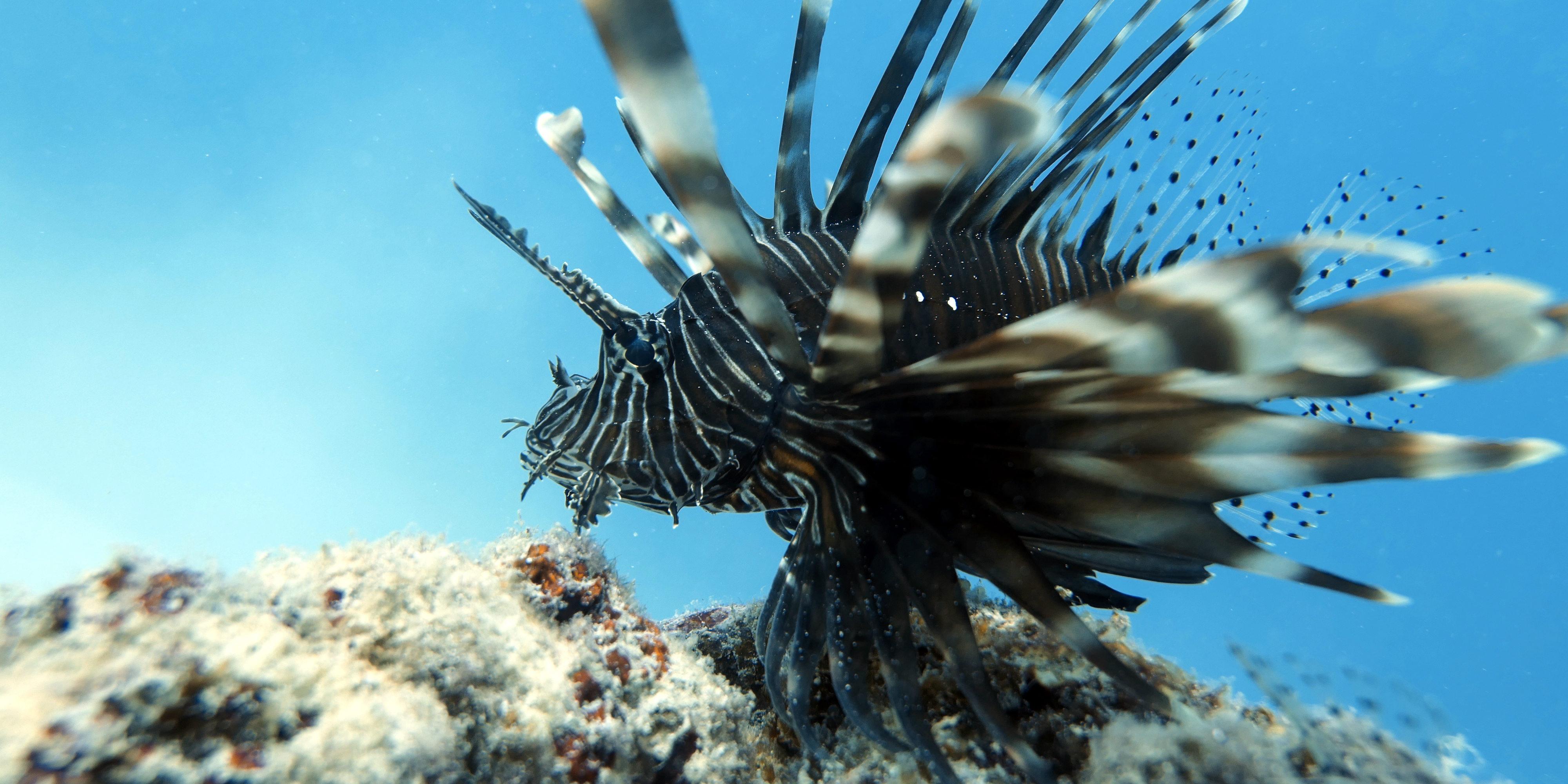 coral reef bleaching
