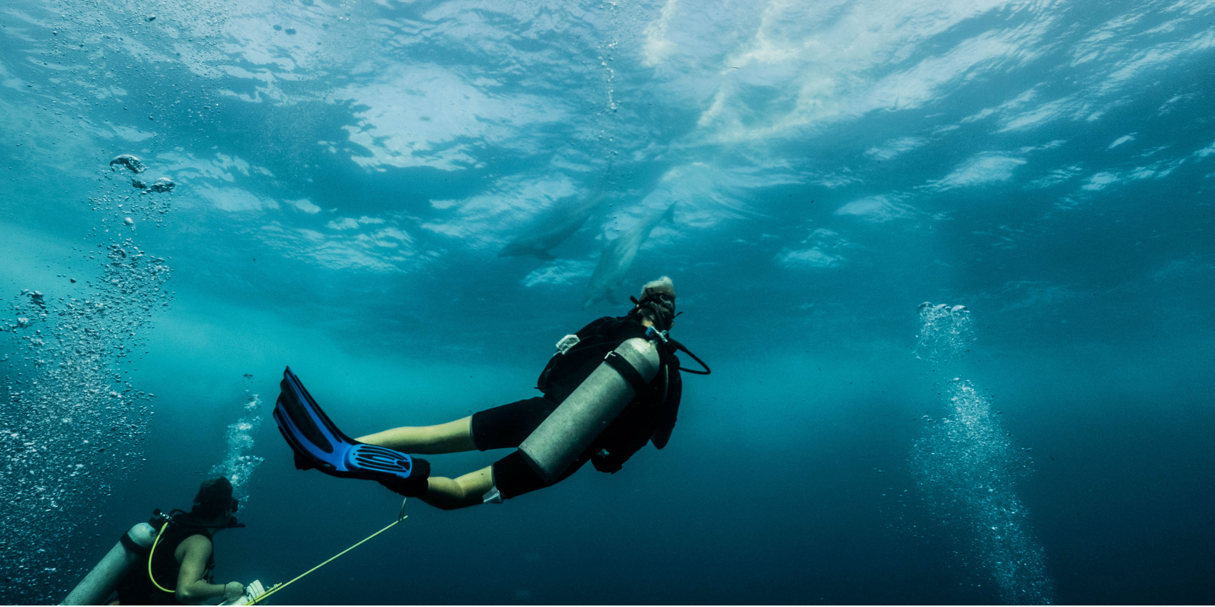 Mexico diving opportunities are diverse. GVI participants conduct vital marine research off of the Yucatan Peninsula while gaining scuba diving qualifications.