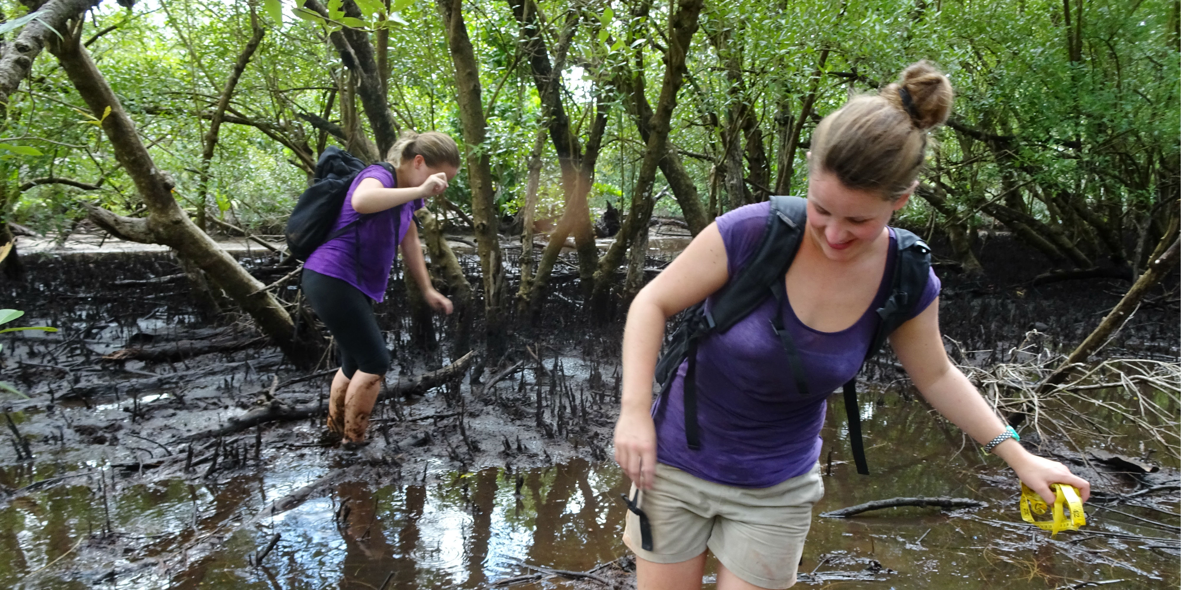 Participants help to record data on mangrove forests while volunteering in Curieuse.