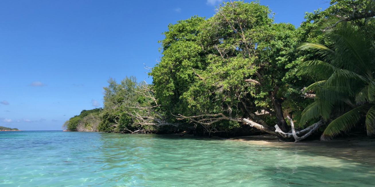 These coastal mangrove forests in Seychelles help to protect the shoreline.