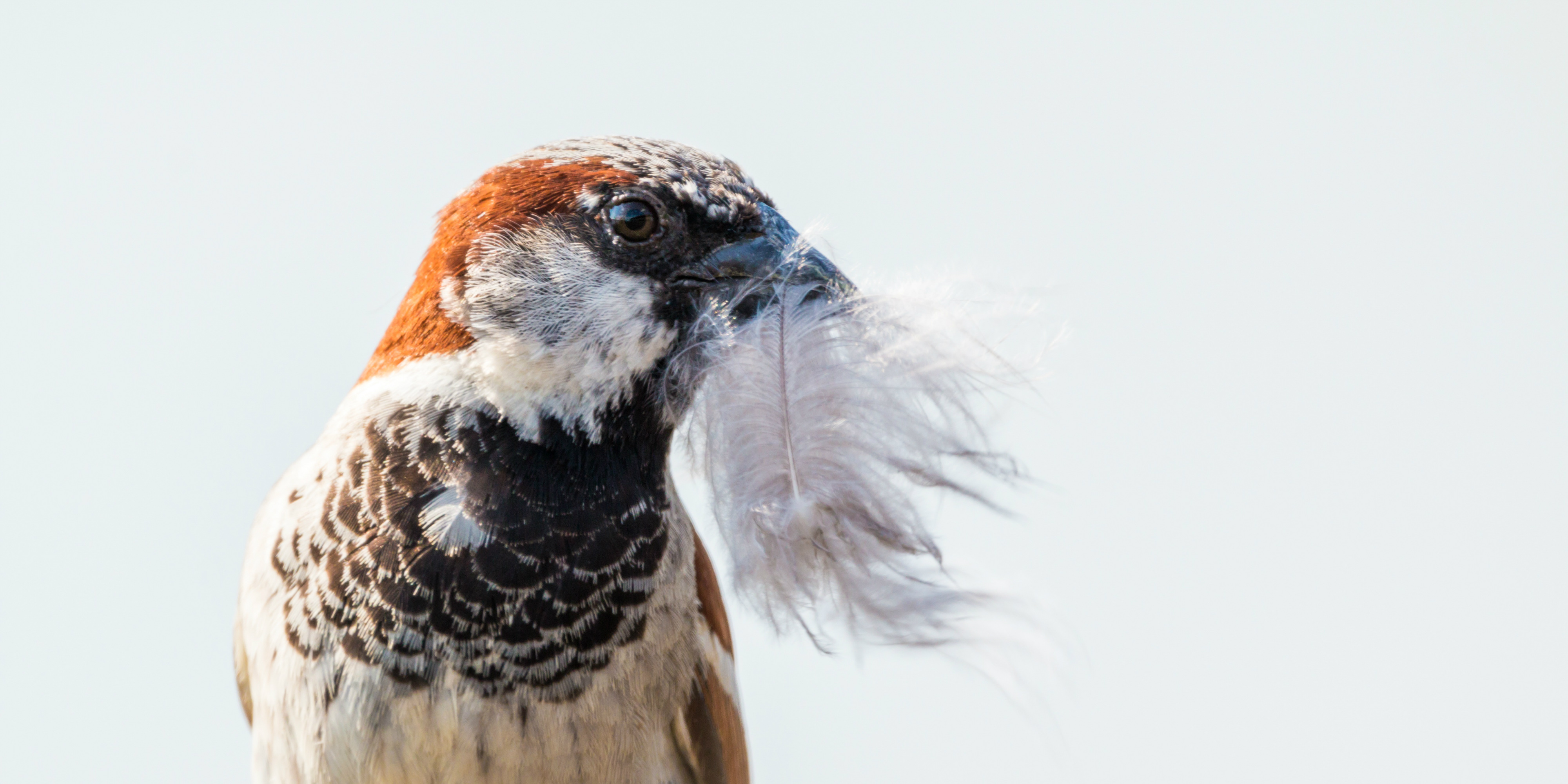 A bird collects feathers to provide insulation in its nest | eco-friendly tourism.