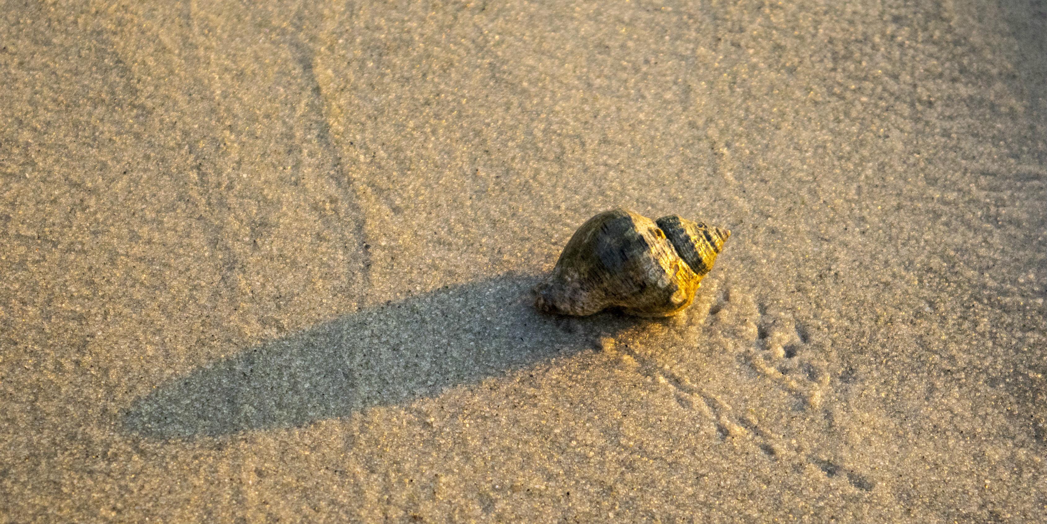 A hermit crab crawls across a beach | responsible travel