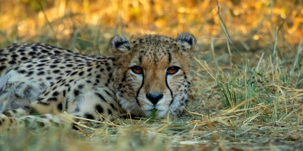 The fortress conservation project in Limpopo, South Africa has been focusing on tracking and data collection.