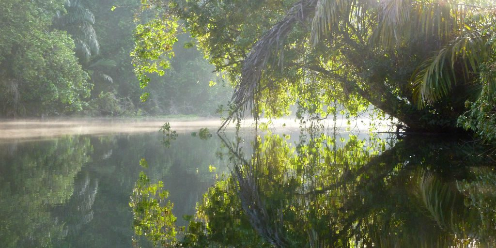 The Ecological value of the Tortuguero national park is priceless, being a hot-spot for species diversity.
