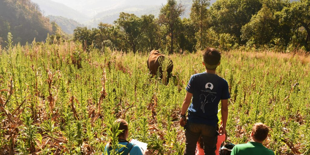 gvi volunteers on wildlife conservation