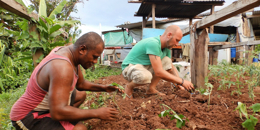 Two men planting seedlings into soil in Dawasamu.