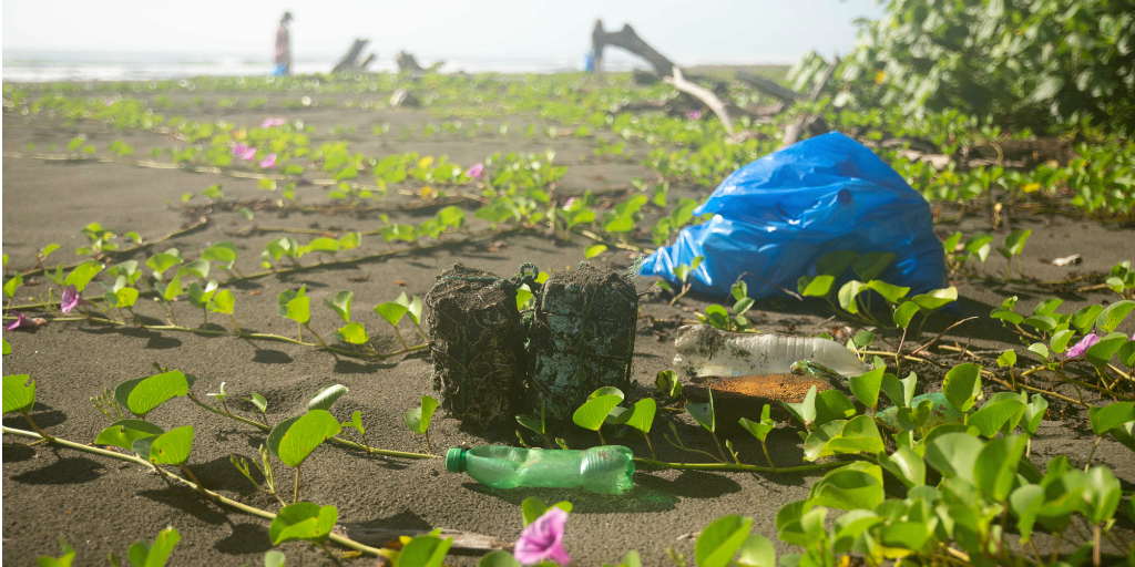 A variety of litter lying amongst the vegetation on a beach.