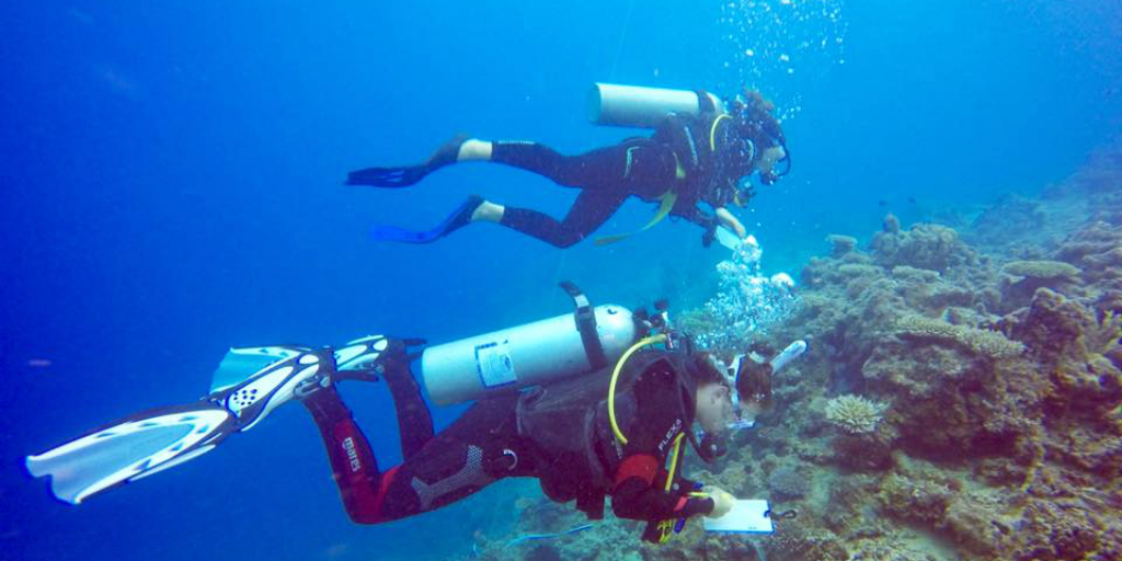 Work together when you volunteer as a couple on a GVI marine conservation program