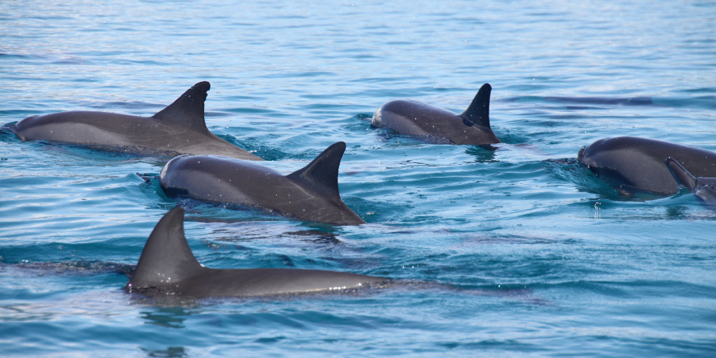 volunteer with dolphins in canary islands