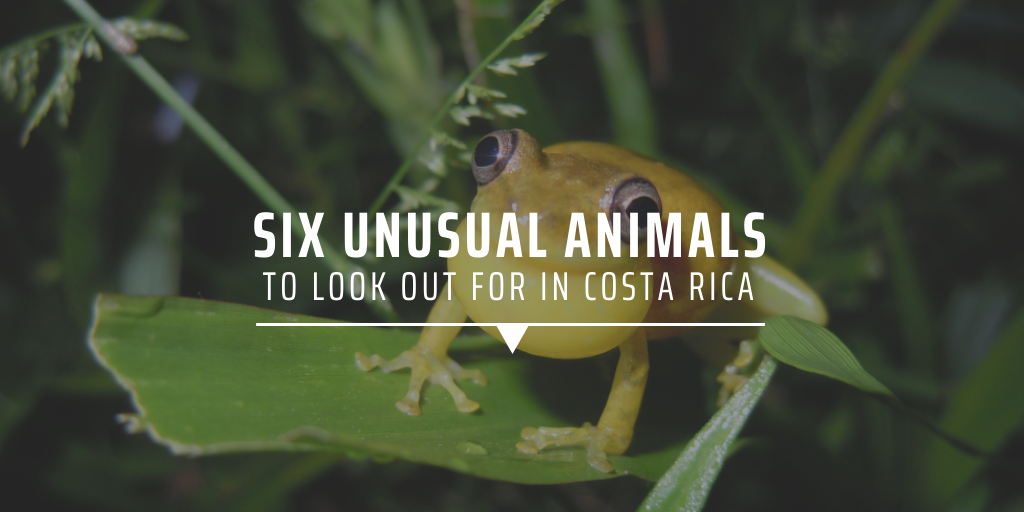 Six unusual animals to look out for in Costa Rica