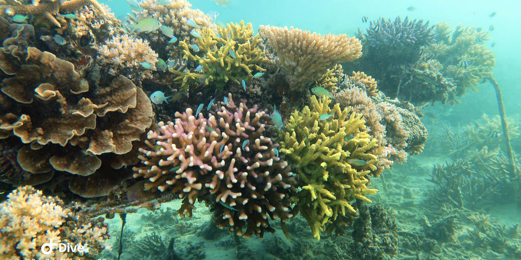 Coral bleaching causes coral to become more brittle and more susceptible to disease.