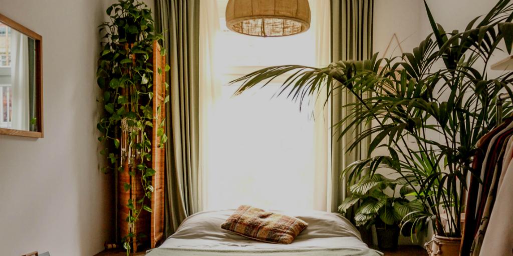 indoor plants can improve sleep