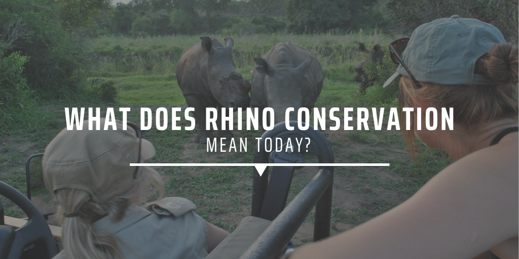 What does rhino conservation mean today