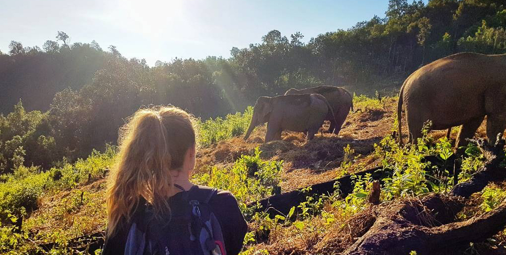 GVI participants behaving ethically by keeping their distance from the elephants when observing their behaviours