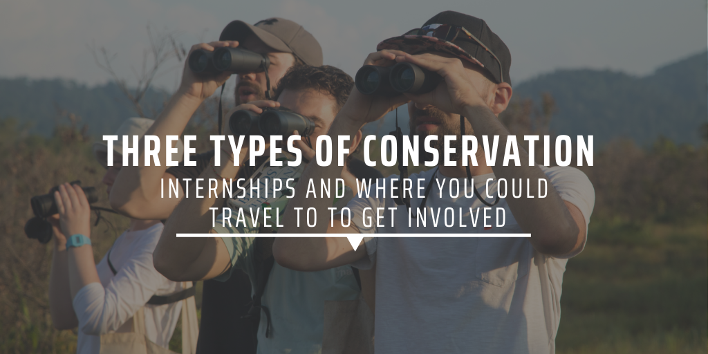 Three types of conservation internships and where you could travel to to get involved