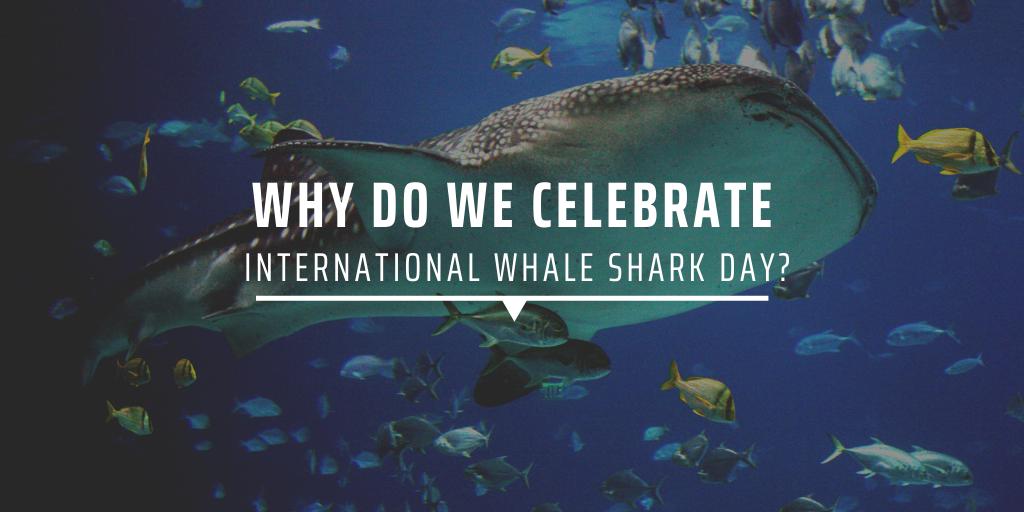 Why do we celebrate International Whale Shark Day?